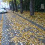 Leaf-fall under the lime trees - Hornsey Pk Rd