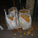 Leaf harvest - four bags in 10 days