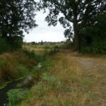 Lost stream: the restored Moore Brook at Firs Farm, Enfield