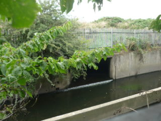 The Carbuncle Passage culvert at Pymmes Brook
