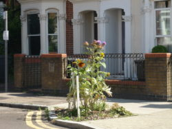 New flowerbeds on Hornsey Road